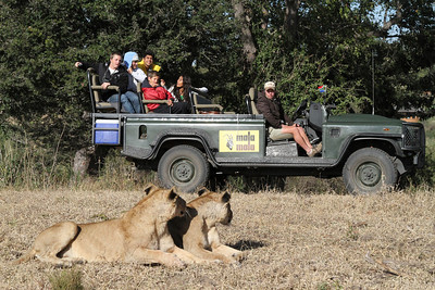 Kids wait for the lions to wake up