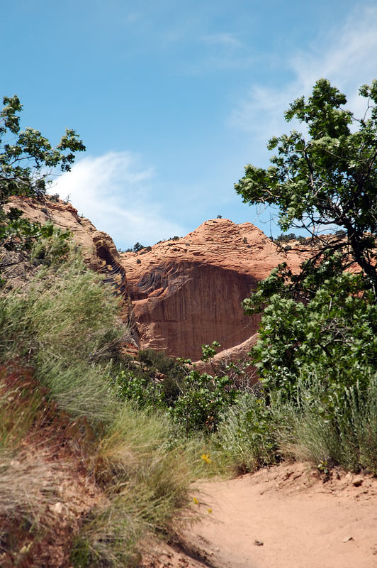"Scenery on the trail to <a href=""http://www.utah.com/hike/calf_creek.htm"" target=""_blank"">Lower Calf Creek Falls</a>"