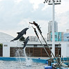 Dolphin performance at the Oceanogràfic complex.