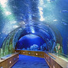 Another building in the Oceanogràfic complex contains this tunnel aquarium.