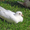 And a pigeon on the grass in the square.