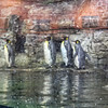 The Penguin exhibit behind glass with falling snow.
