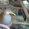 Bird at the Oceanogràfic complex.