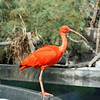 Scarlet Heron at the Oceanogràfic complex in Valencia's City of Arts & Sciences.