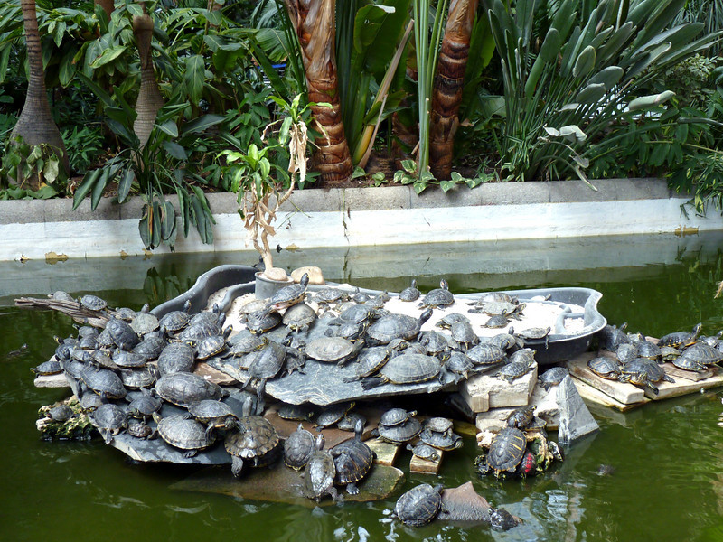 Turtles in the Atocha train station.