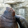 A smart sea lion knows who to kiss up to.