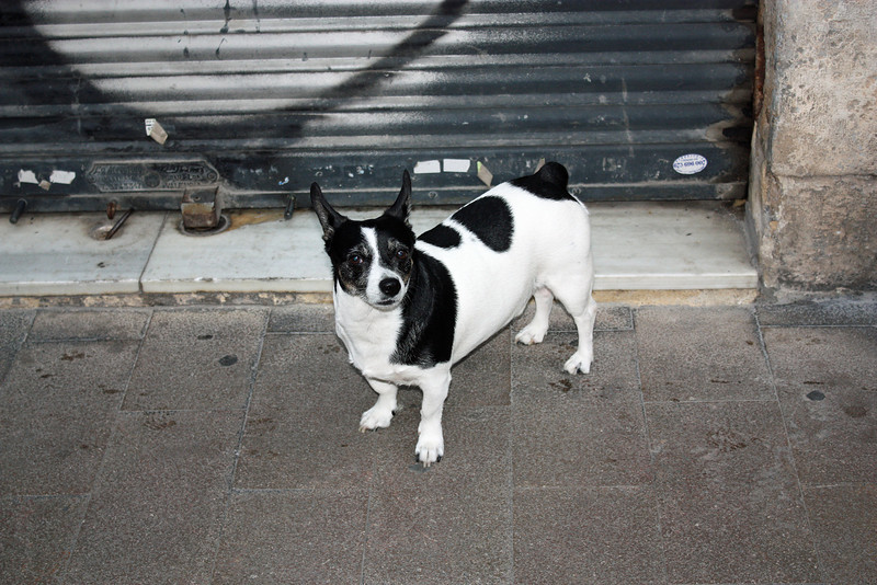 Doggie in an alley way.