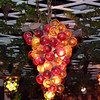 Illuminated café grapes.