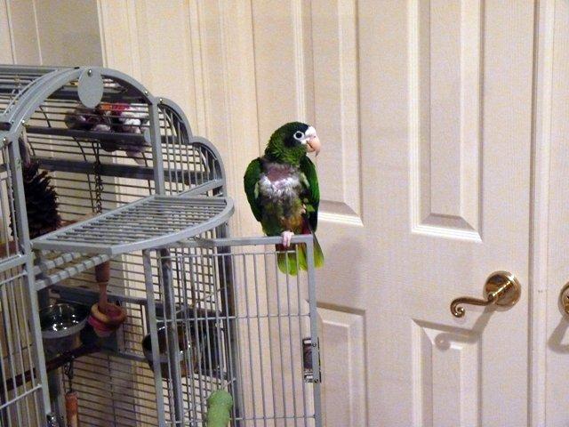 Lynn's bird, Poco, at Dad's house.