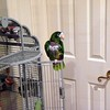 Lynn's bird, Poco, at Dad's house.