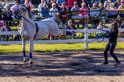 Hermann's Royal Lipizzan Stallions Royal Lipizzaner Stallions, Flying horses, Florida