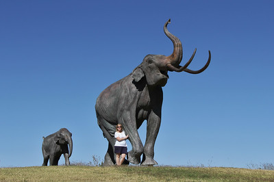 Giant Columbian Mammoth - TX
