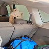 2019-03-20-0001A-Trip to Tahoe with Dogs-Teddy