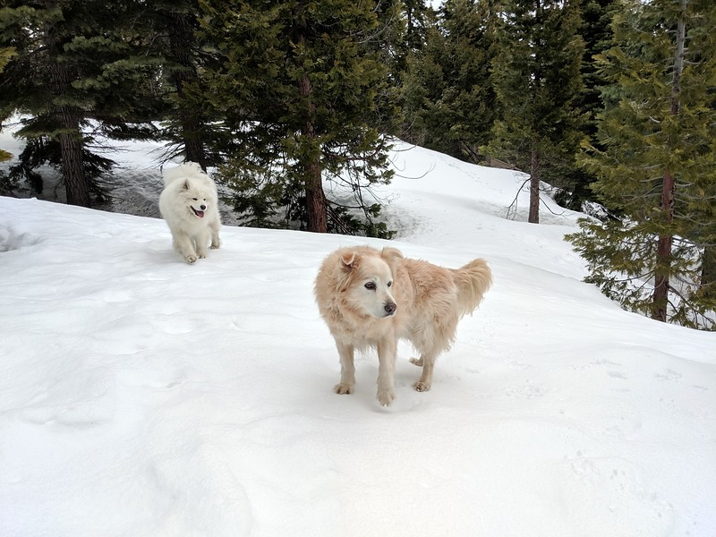 2019-03-21-0001-Trip to Tahoe with Dogs-Lake Tahoe-Teddy the Dog-Leo the Dog