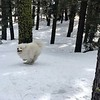 2019-03-21-0009-Trip to Tahoe with Dogs-Lake Tahoe-Teddy the Dog