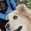 2019-03-21-0006-Trip to Tahoe with Dogs-Lake Tahoe-Debby-Leo the Dog