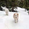 2019-03-21-0002-Trip to Tahoe with Dogs-Lake Tahoe-Teddy the Dog-Leo the Dog