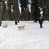 2019-03-21-0020-Trip to Tahoe with Dogs-Lake Tahoe-Debby-Teddy the Dog-Leo the Dog