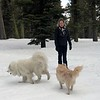 2019-03-21-0018-Trip to Tahoe with Dogs-Lake Tahoe-Debby-Teddy the Dog-Leo the Dog