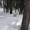 2019-03-21-0008-Trip to Tahoe with Dogs-Lake Tahoe-Teddy the Dog