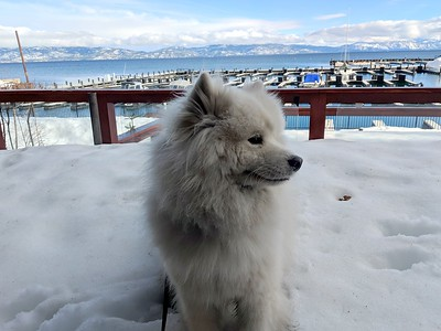 2019-03-20-0005-Trip to Tahoe with Dogs-Lake Tahoe-Teddy the Dog