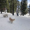 2019-03-21-0017-Trip to Tahoe with Dogs-Lake Tahoe-Curtis-Teddy the Dog-Leo the Dog