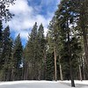2019-03-21-0012-Trip to Tahoe with Dogs-Lake Tahoe