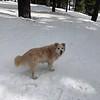 2019-03-21-0007-Trip to Tahoe with Dogs-Lake Tahoe-Leo the Dog