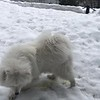 2019-03-20-0010-Trip to Tahoe with Dogs-Teddy the Dog-Leo the Dog