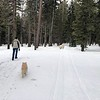 2019-03-21-0021-Trip to Tahoe with Dogs-Lake Tahoe-Curtis-Teddy the Dog-Leo the Dog