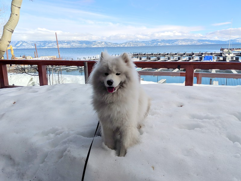 2019-03-20-0006-Trip to Tahoe with Dogs-Lake Tahoe-Teddy the Dog