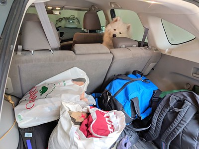 2019-03-20-0001-Trip to Tahoe with Dogs-Teddy