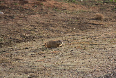 20171120-003 - Texas - Caprock Canyons SP - Prarie Dog Town