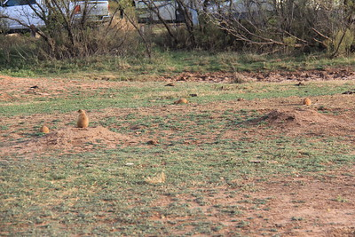 20171120-002 - Texas - Caprock Canyons SP - Prarie Dog Town