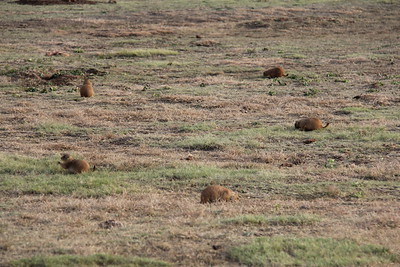 20171120-007 - Texas - Caprock Canyons SP - Prarie Dog Town