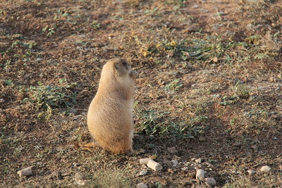 20171120-012 - Texas - Caprock Canyons SP - Prarie Dog Town