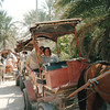 A buggy ride around Tozeur Oasis.