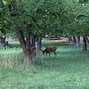 Fruita buck