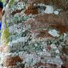 Tree bark!