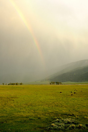 Rain and Rainbow in Lamar Valley