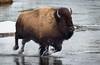 Bob Panick - 2018-01-29 - BHUA02630 - Yellowstone - REP10686