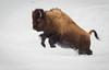 Bob Panick - 2018-01-29 - BHUA02630 - Yellowstone - REP10449