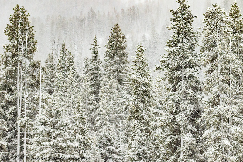 snow in Yellowstone NP-2