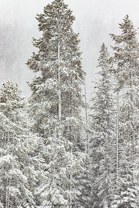 snow in Yellowstone NP
