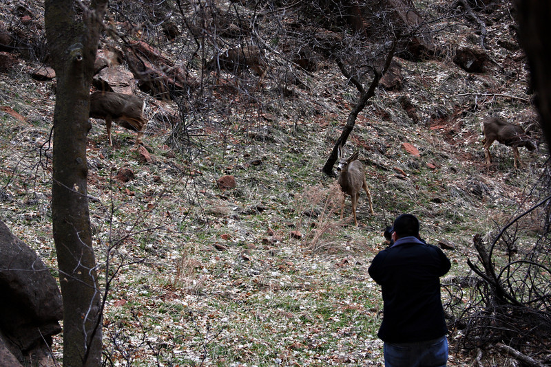 Me getting as close to the deer as I could without scaring them away.