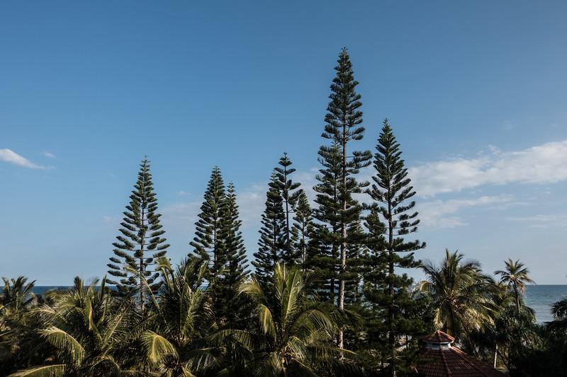 Pines and palms in Le Méridien, Nouméa.