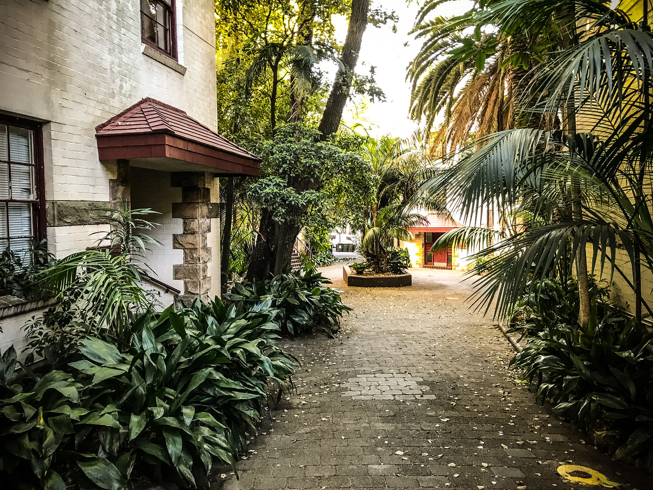Our courtyard in Rushcutter's Bay.