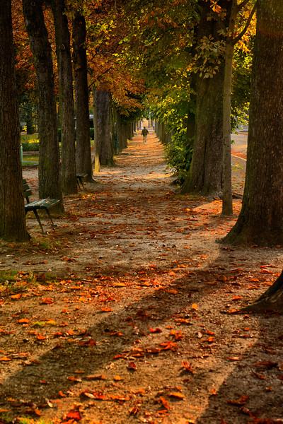 Tree lined lane near Musee Marmottan Monet