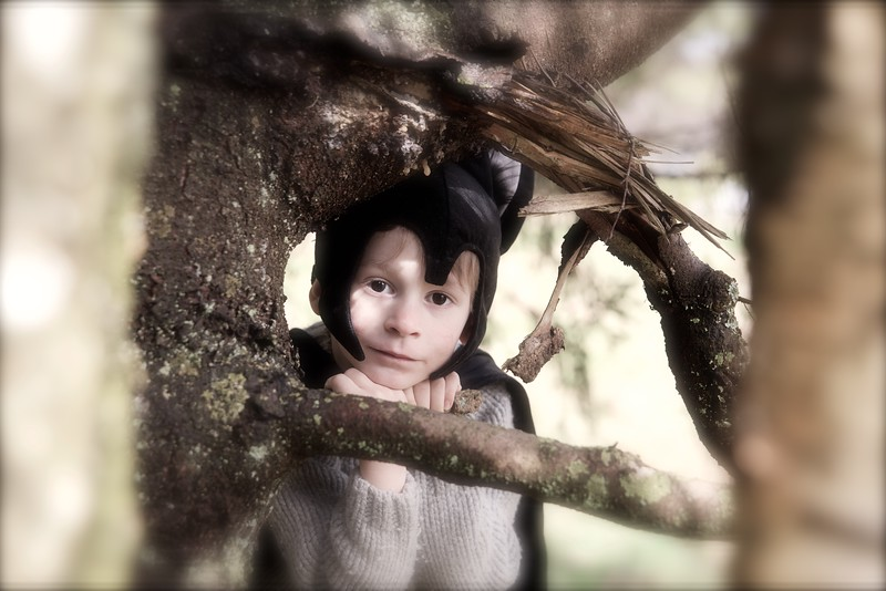 Bat In The Tree