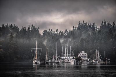 morning fog, Bainbridge WA